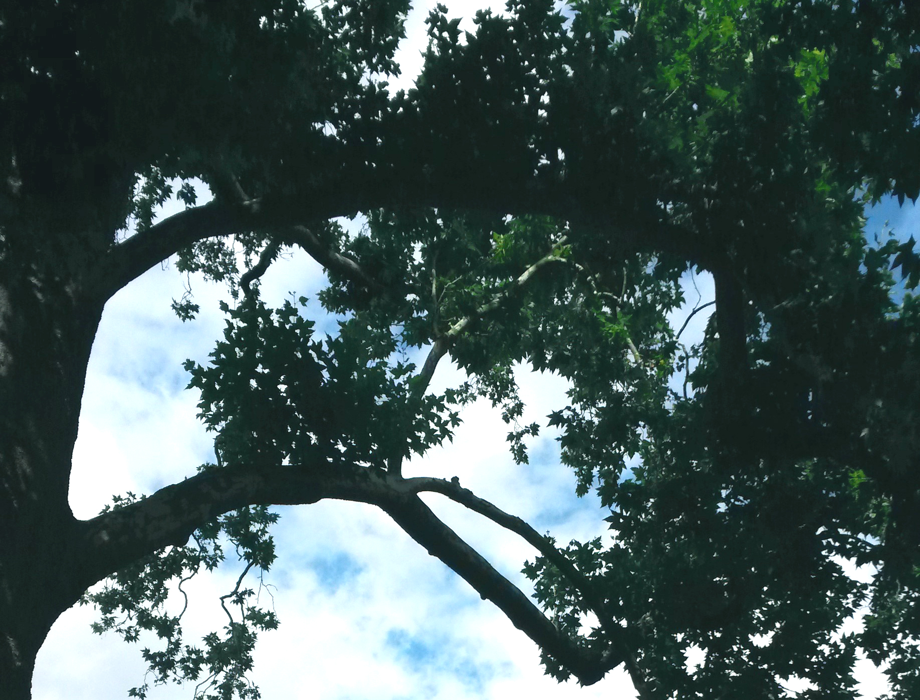tree_culture-shock